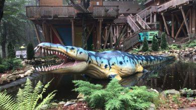 Photo of De la cetatea Raşnov la Dino Parc – sau cum poţi face un copil fericit